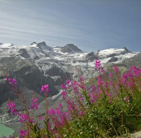 Foto von der Bernina, dem Festsaal der Alpen beim Berninatrek in der Schweiz